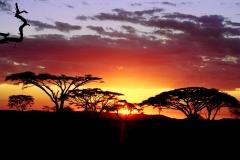 africasunet